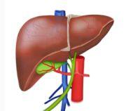 Nach dem schnellen Eintritt der Wirkung wird der Wirkstoff sehr schnell wieder in der Leber inaktiviert.