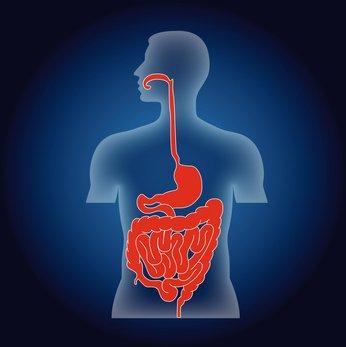 Speiseröhre und Magen