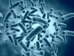 Bakterien im Mund sind häufiger Auslöser für Parodontitis und Givingitis.