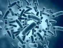 Die Bakterien leben von Speiseresten