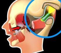 Funktionsweise von einem Kiefergelenk