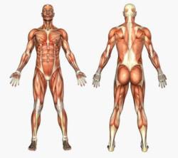 Wirkung naturheilkundlicher Verfahren auf den gesamten Organismus